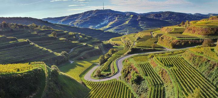 Weingebiet Kaiserstuhl