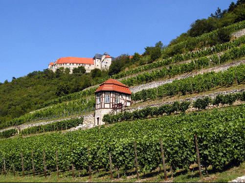 Weinregion Saale-Unstrut