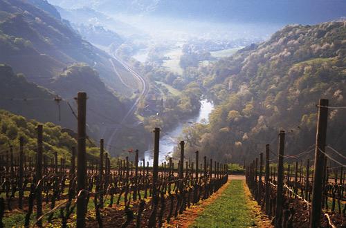 Nahe Weinregion